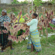 Gender equity in coastal zone management: experiences from Tanga, Tanzania.