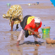 Gender Makes the Difference: Fisheries and aquaculture in coastal zones