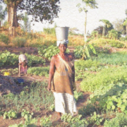 Gender Makes the Difference: Agriculture