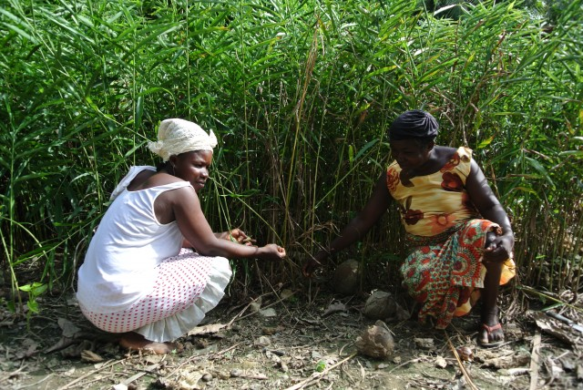Ghana women with medicinal plants
