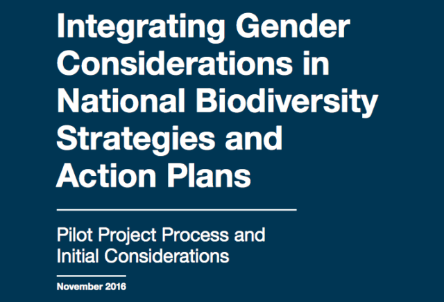 Gender considerations in NBSAPs: Pilot process