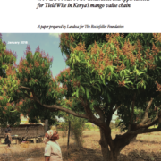 Land rights as a critical factor in donor agricultural investments: Constraints and opportunities for YieldWise in Kenya's mango value chain