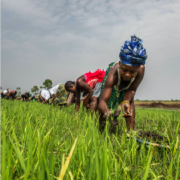 Adaptation Community Meeting: Promoting Gender-Responsive Adaptation to Climate Change